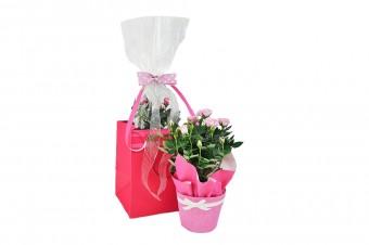 Flowering Plant Gift