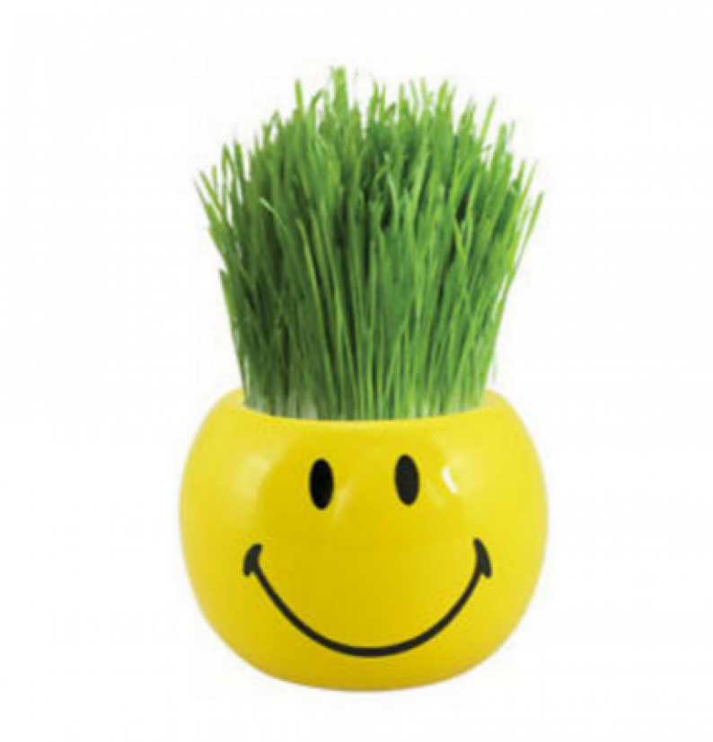 Grass Hair Kit Smiley Faces