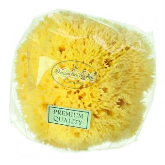 "Honeycomb Sea Sponge 3.5 - 4"""